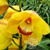 Waikanae Gold