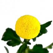 Ping Pong Golden