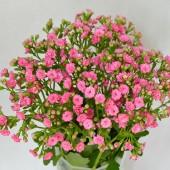 Sweet Pink Meadow