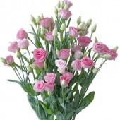 Papilon Rose Pink